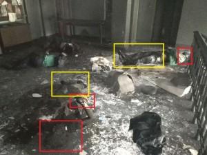 En esta foto claramente se ve el disparo a la cabeza, debajo vemos el charco de sangre.