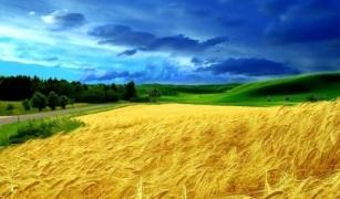campo de Ucrania